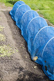 Net tunnel to protect vegetable and fruit plants from birds Royalty Free Stock Photography