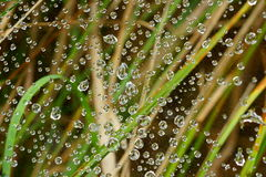 Water drops in spiderweb in garden by blurred background. Close-up of water drops glistening in a filigree spiderweb in between grass blades. Background blurred stock photo