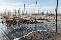 Net and wooden pole for entrap algae. Stock Photo