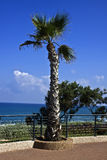 Netanya. Palm tree at the sea embankment Royalty Free Stock Image