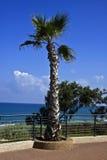 Netanya. Palm tree at the sea embankment. Netanya, popular sea resort in Israel Royalty Free Stock Image