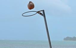 Netball кокоса стоковая фотография rf