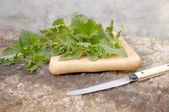 Netel op een knipselraad met een mes kokende netel voor salade royalty-vrije stock afbeeldingen