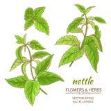Netel vectorreeks Stock Foto