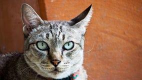 Netelige Cat Looking stock foto's