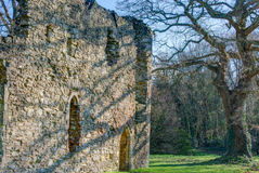 Netley Abbey. An outlying building in Netley Abbey close to an ancient tree Stock Photo