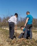 Neto, pai e avô plantando uma árvore de ameixa em um orch fotografia de stock