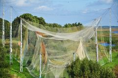 Nets. Used for catching birds for ringing in vente cape lithuania Royalty Free Stock Photo