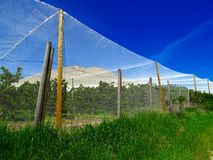 Nets over cherry orchard. To protect fruit from birds and rain Royalty Free Stock Photos