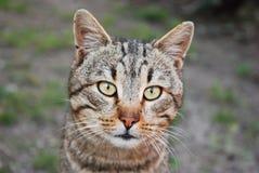 NETT: Katzengesicht Lizenzfreie Stockfotografie