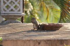 Nett und cutly grüßt chimunks lizenzfreies stockfoto