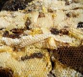 Nettare del miele dell'alveare Fotografia Stock