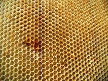 Nettare del miele dell'alveare Fotografie Stock