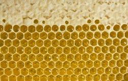 Nettare e miele in nuovo pettine Immagini Stock