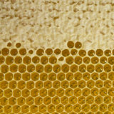 Nettare e miele in nuovo pettine Fotografie Stock Libere da Diritti