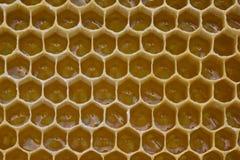 Nettare e miele in nuovo pettine fotografia stock libera da diritti