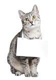 Nette ägyptische Mau Katze Lizenzfreie Stockfotos