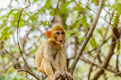 nette Affeleben in einem Naturwald Lizenzfreie Stockfotografie