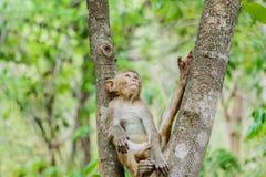 nette Affeleben in einem Naturwald Lizenzfreie Stockfotos