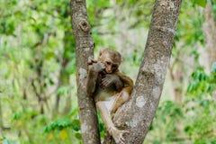 nette Affeleben in einem Naturwald Stockfotografie
