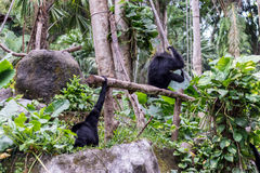 Nette Affen im Zoo von tropischer Bali-Insel, Indonesien Ein netter Affe lebt in einem Naturwald von Bali Lizenzfreie Stockbilder