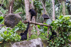 Nette Affen im Zoo von tropischer Bali-Insel, Indonesien Ein netter Affe lebt in einem Naturwald von Bali Stockfotos