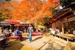 Nette Ahornjahreszeit, Japan Stockfoto