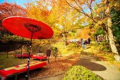 Nette Ahornjahreszeit, Japan Lizenzfreie Stockbilder