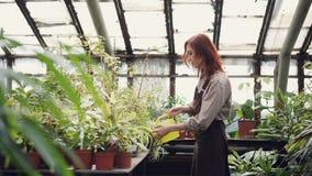 Nette Arbeitnehmerin in der Uniform wässert Grünpflanzen im Obstgarten mit Wässerntopf Recht junge Frau ist stock footage