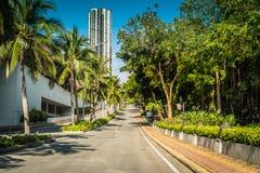 Nette asfalt Stra?e mit Palmen gegen den blauen Himmel und die Wolke stockfoto