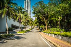 Nette asfalt Stra?e mit Palmen gegen den blauen Himmel und die Wolke stockbild