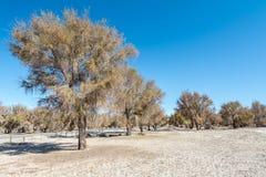 Nette Bäume an Tambillo-Reserve Lizenzfreies Stockbild