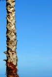 Nette Baumpalme und blauer Himmel Lizenzfreies Stockfoto