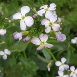 So nette Blume Lizenzfreies Stockbild