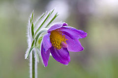Nette Blume Stockfoto