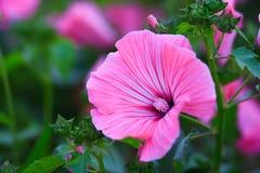 Nette Blume lizenzfreie stockfotografie