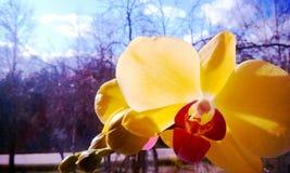 Nette Blume Stockbild