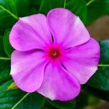 Nette Blume Stockfotografie