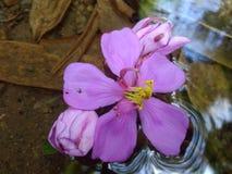 Nette Blume im Wasser lizenzfreie stockfotografie