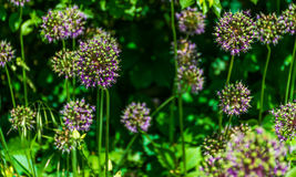 Nette Blumen Stockfoto
