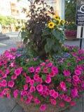 Nette Blumen Lizenzfreies Stockbild