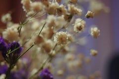 Nette Blumen Lizenzfreie Stockfotos