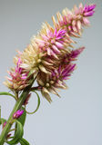 Nette Blumen Stockbild