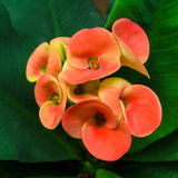 Nette Blumen Lizenzfreie Stockfotografie