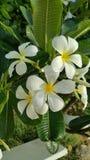 Nette Blumen Lizenzfreies Stockfoto
