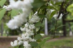 Nette Blumen in der Blüte stockbild