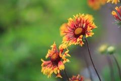 Nette Blumen im Garten Stockbild