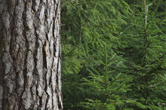Nette bomen royalty-vrije stock foto