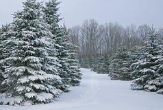 Nette Bomen die met Sneeuw worden behandeld Royalty-vrije Stock Foto's
