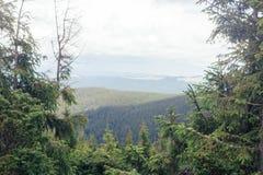 Nette bomen met berglandschap op achtergrond royalty-vrije stock afbeelding